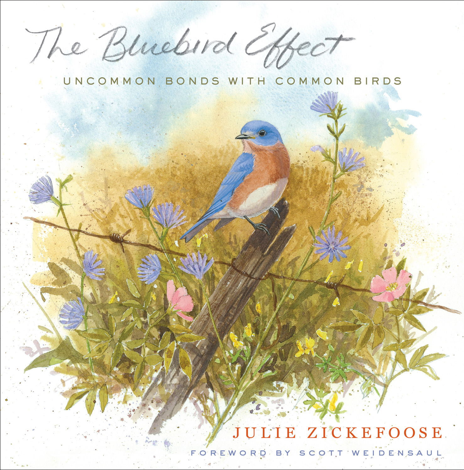 The Bluebird Effect: Uncommon Bonds with Common Birds book cover